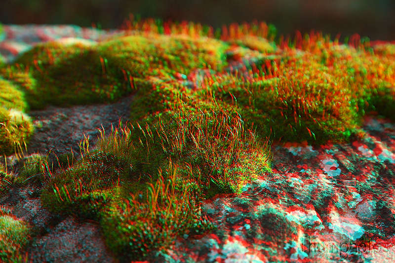 3D anaglyphe lunette rouge bleu cyan macro red blue bleu mousse vertes green nature