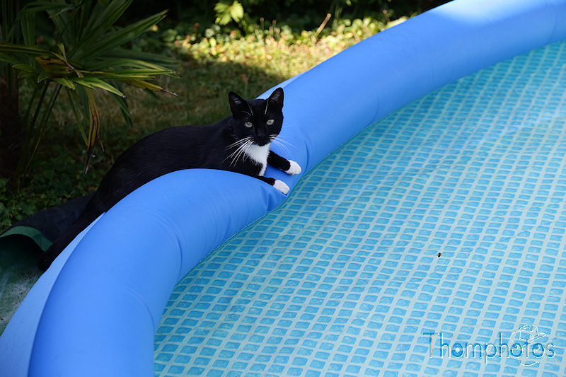 nature animal chat cat meow miaou tibou jardin garden grass herbe verte green soleil sun sunny piscine swimming pool water eau bleue blue chaussette noir blanc