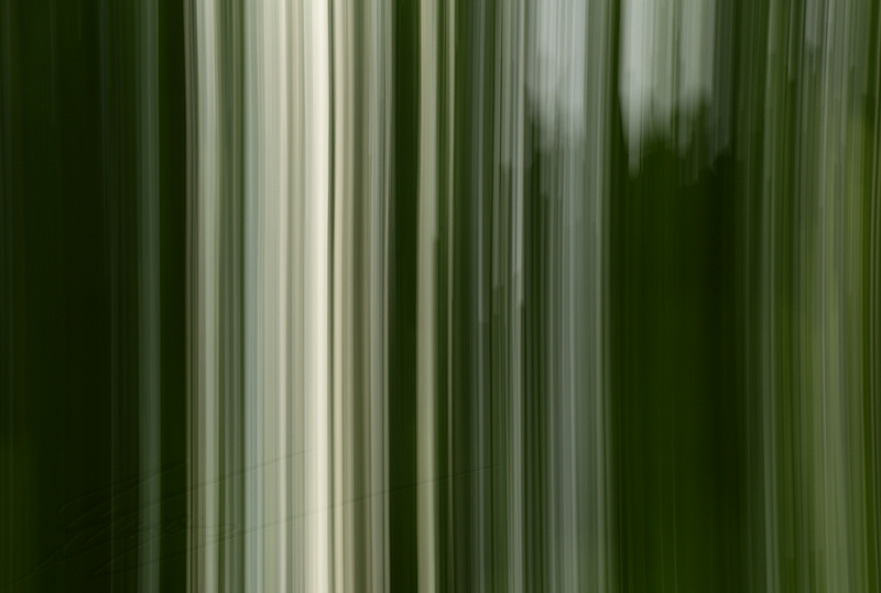 divers abstrait vert lignes nature arbres picasso peinture traits lines green trees paint tâches camo camouflage hiding cacher
