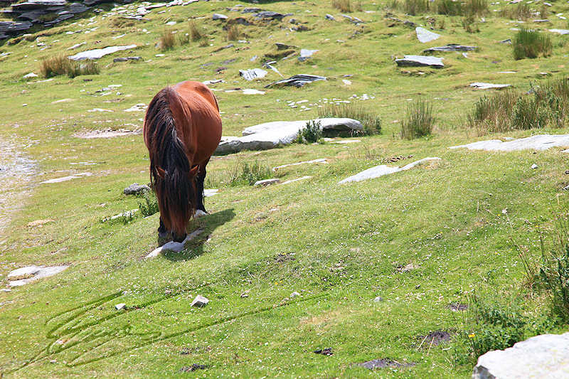 reportage pays basque france rhune pottok cheval choual