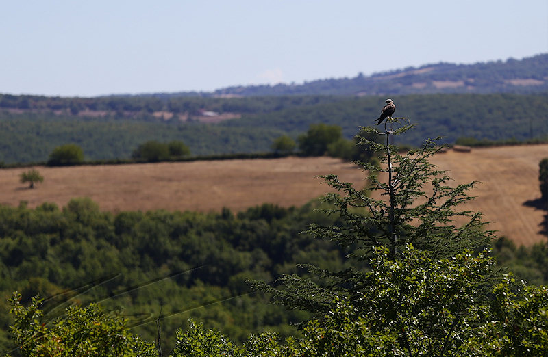 reportage 2015 france corrèze lot dordogne causse quercy périgord rocamadour roc amadour à ma dour rocher des aigles eagle rock oiseaux birds parc park zoo liberté freedom vol flight milan noir rapace buse variable perchée arbre tree standing